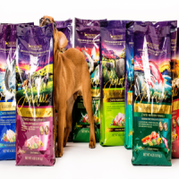FREE Zignature Dog Food Sample – Request Yours Now!